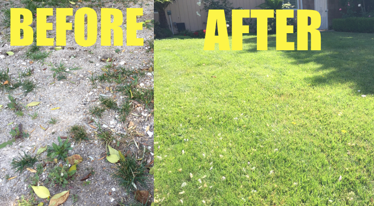 Before and After Installing Sprinklers